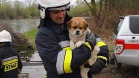 Strażacy uratowali psa, który utknął na filarze mostu w Bielanach