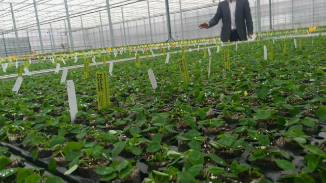 Technologiczne centrum ogrodnicze