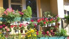 Trwa konkurs na najpiękniejszy balkon i ogródek przyklatkowy Dzielnicy Nowe Miasto