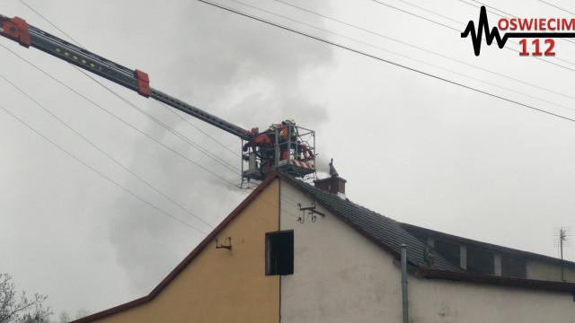 Trzy pożary sadz w ciągu 24 godzin. ZDJĘCIA, FILM !