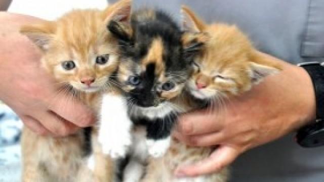 Trzy puchate kuleczki do adopcji. Poszukiwany także dom tymczasowy dla całej rodzinki!