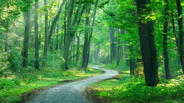 Tymczasowy zakaz wstępu do lasów i Parków Narodowych - InfoBrzeszcze.pl