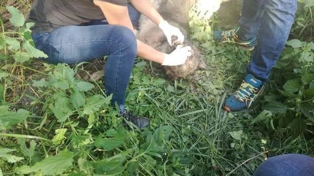 W okrutny sposób zabił psa, bo szczekał i przeszkadzał mu [ZDJĘCIA DRASTYCZNE]