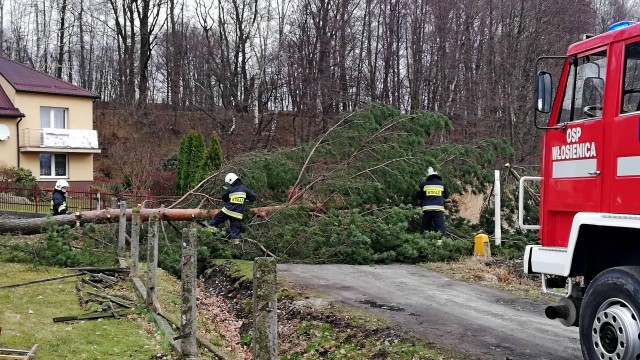 Wiatr znów dał o sobie znać. Najwięcej interwencji w gminie Oświęcim – ZDJĘCIA!