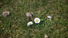 Wiosna budzi się na nowo