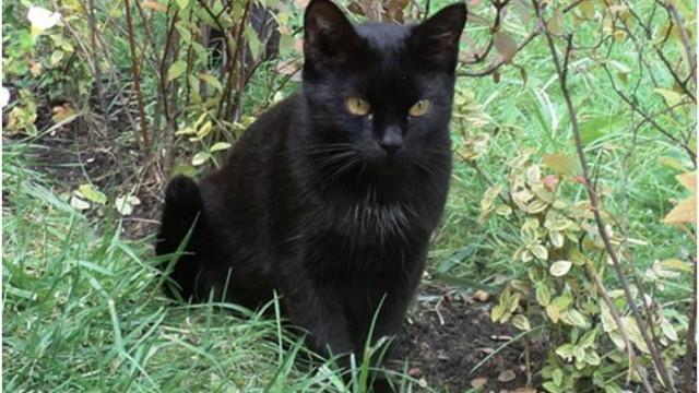 ZABORZE. Zaginęła czarna kotka ''Mamba''