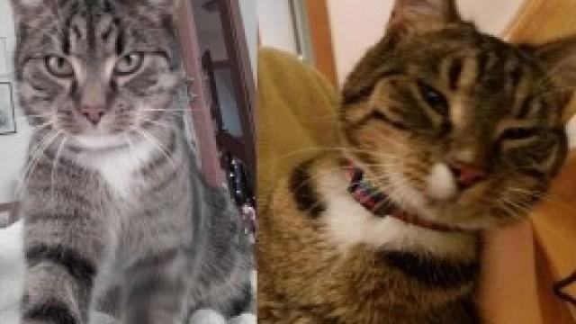 Zaginął kot - znaleziono innego. Prośba o pomoc!