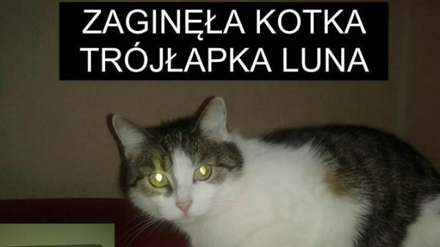 Zaginęła kotka