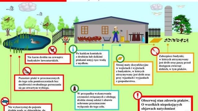 Zasady ochrony przed wysoce zjadliwą grypą ptaków - inf. ważna dla hodowców drobiu / gołębi!