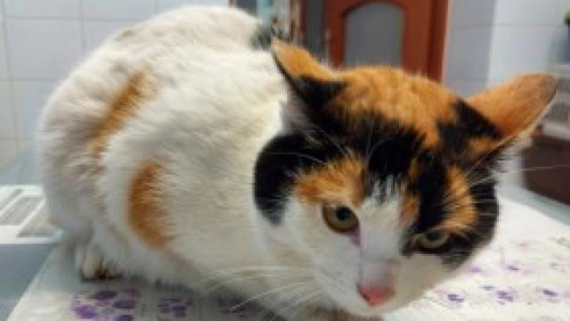 Znaleziono kotkę w Witkowicach. Zwierzak po operacji amputacji przedniej łapy